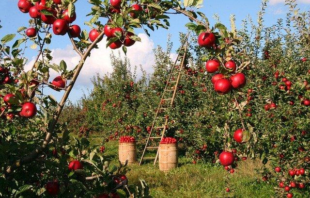 AGRICULTURAL CONSULTANT VETASSESS SKILLS ASSESSMENT